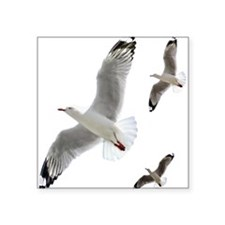 3 Gulls in Flight copy Sticker