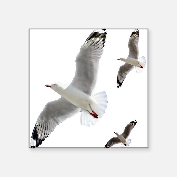 3 Gulls in Flight copy Sticker