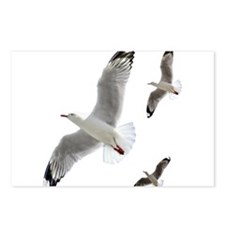 3 Gulls in Flight copy Postcards (Package of 8)
