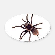 Hairy Brown Tarantula Oval Car Magnet