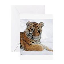 Tiger_2015_0104 Greeting Cards