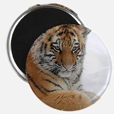 Tiger_2015_0104 Magnets