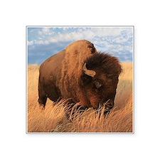 """Bull Buffalo Square Sticker 3"""" x 3"""""""