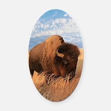 Bull Buffalo Oval Car Magnet