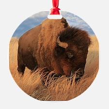 Bull Buffalo Ornament