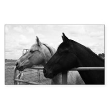 Black & White Horse Photo Rectangle Decal
