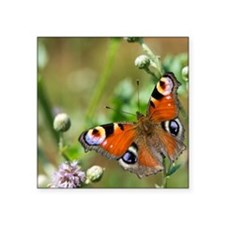 """Peacock butterfly Square Sticker 3"""" x 3"""""""