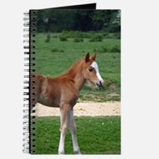 Foal out to pasture Journal