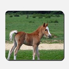 Foal out to pasture Mousepad