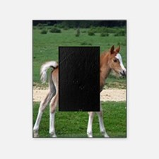 Foal out to pasture Picture Frame