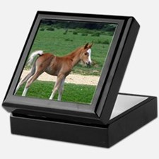 Foal out to pasture Keepsake Box