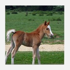 Foal out to pasture Tile Coaster