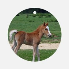 Foal out to pasture Ornament (Round)