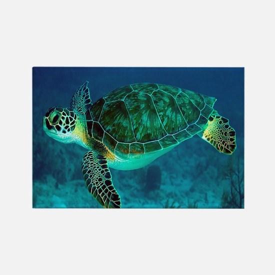 Ocean Turtle Magnets