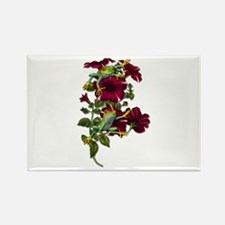 RED PETUNIA FROGS Rectangle Magnet