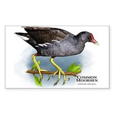 Common Moorhen Decal