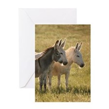 Custer State Park Burros Greeting Cards