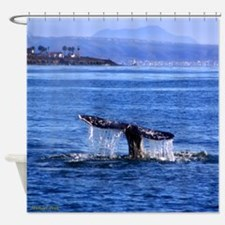 Gray Whale Point Loma Shower Curtain