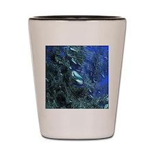 Shiny blue pebbles Shot Glass