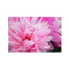 Pink Peony Bloom Magnets