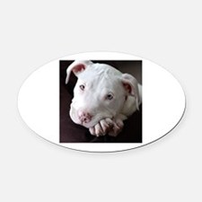 Pit Bull Oval Car Magnet