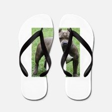 Pit Bull Flip Flops