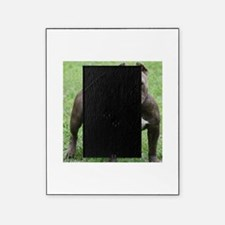 Pit Bull Picture Frame