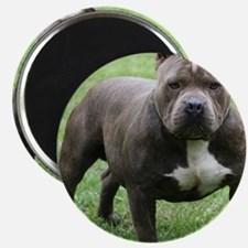 Pit Bull Magnets