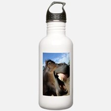sustainable horse Water Bottle
