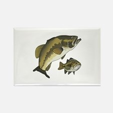 BASS FISHES Magnets
