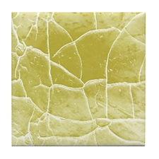 Summer Bird Mural marble tile Tile Coaster