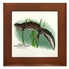Great Crested Newt Framed Tile