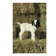 Kid Playing In The Hay Postcards (Package of 8)