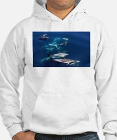 Dolphin Party Hoodie
