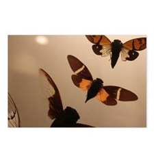 Cicada Silhouettes Postcards (Package of 8)