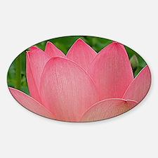 Sacred Lotus Flower Sticker (Oval)