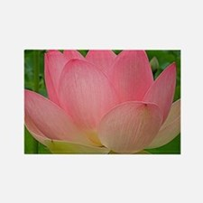 Sacred Lotus Flower Rectangle Magnet