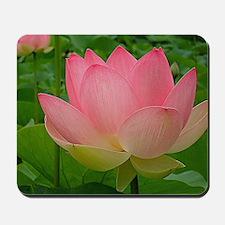 Sacred Lotus Flower Mousepad