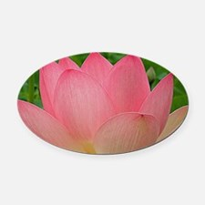 Sacred Lotus Flower Oval Car Magnet