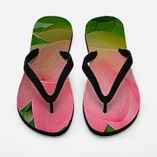 Sacred Lotus Flower Flip Flops