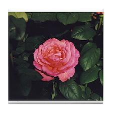 Tender Rose Tile Coaster