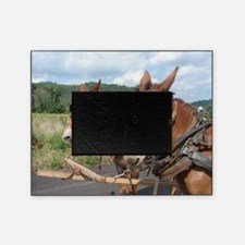 Two Mules for Sister Sue Picture Frame