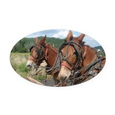 Two Mules for Sister Sue Oval Car Magnet
