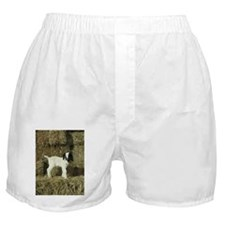 Kid Playing In The Hay Boxer Shorts
