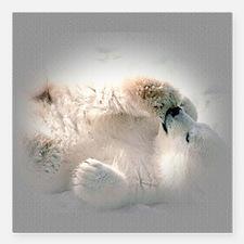 """Baby polar bear Square Car Magnet 3"""" x 3"""""""