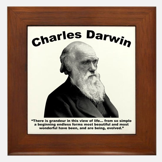 Darwin: Evolved Framed Tile