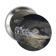 """Smiling baby 'gator 2.25"""" Button (10 pack)"""
