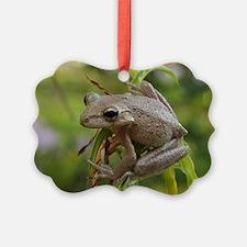 Bug Eyed Ornament