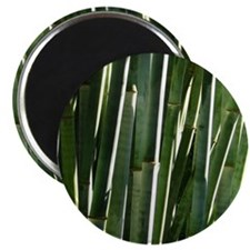 Bamboo Absrtact Magnet