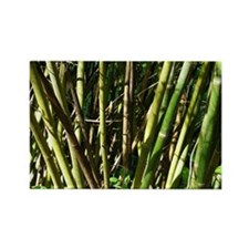 Bamboo Canes Rectangle Magnet